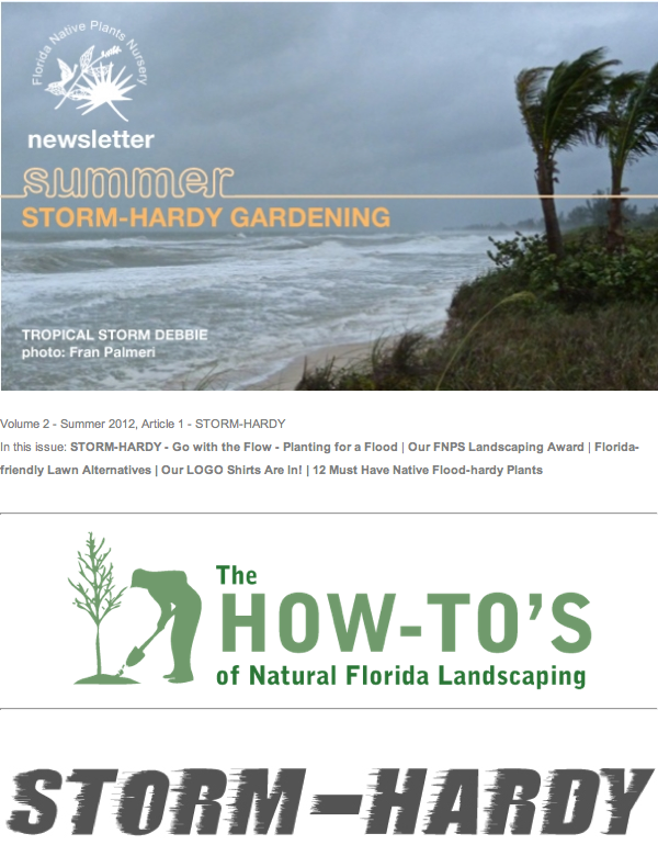 storm hardy newsletter 2012 summer