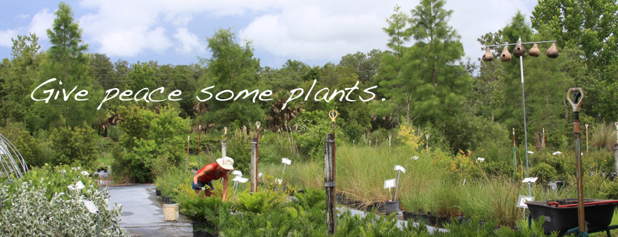 Florida Native Plants Nursery